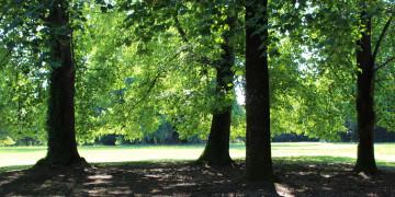 varosi_ter_tervezes_park_tervezes
